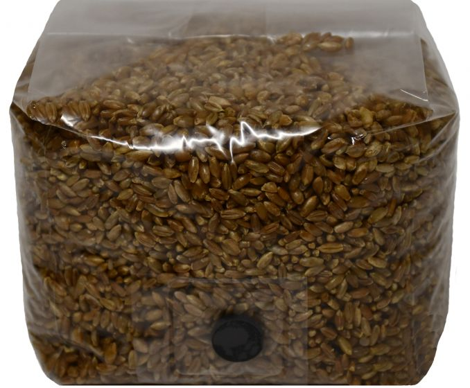 Rye Berry Mushroom Substrate with Self Healing Injection Port 3lb Bag