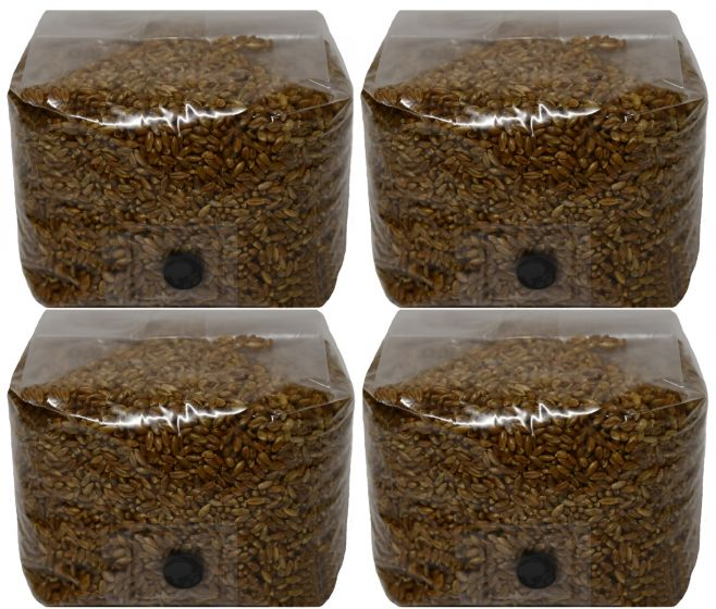 3lb Rye Berry Mushroom Substrate with Self Healing Injection Port 4 Pack