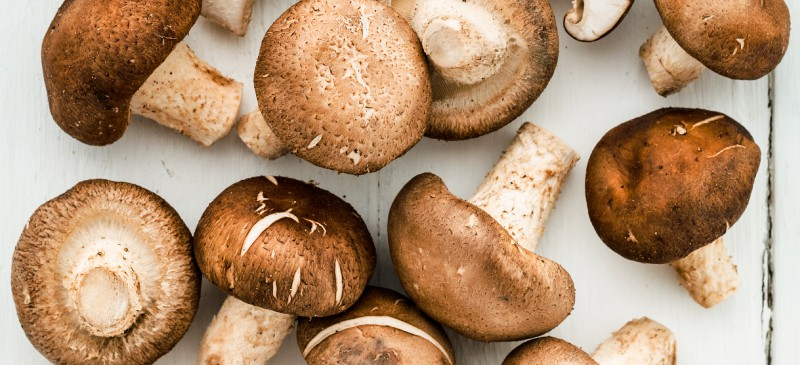 Mushrooms Are a Low-Carb, Nutrient-Rich Food Source