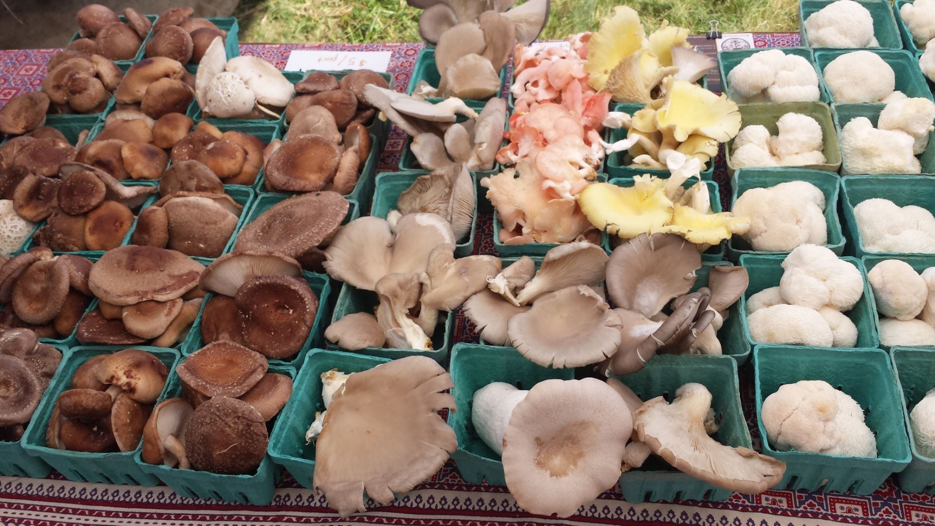 The Best Conditions for Growing Mushrooms